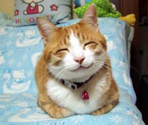 зоогостиница для кошек, передержка