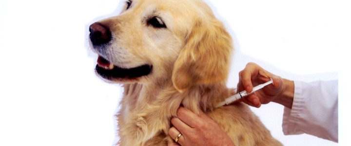 вакцинация животных на дому