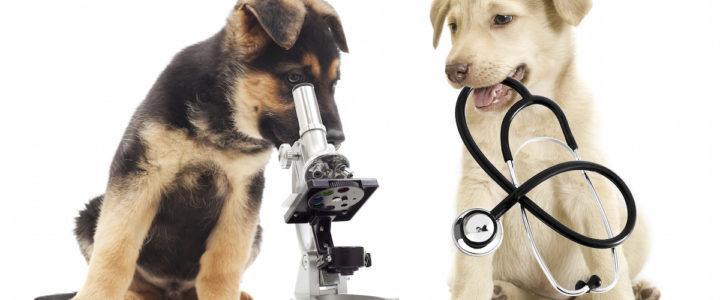 Анализы животным